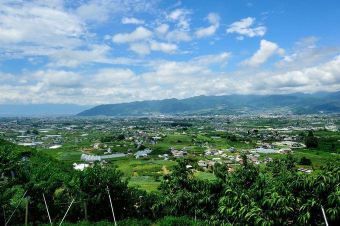 勝沼はぶどうの収穫日本一