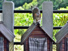 猫好きにはたまらない!台湾・猴硐(ホートン)の猫村