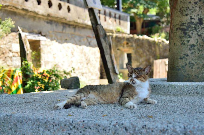 猫も使う陸橋を渡って猫村へ