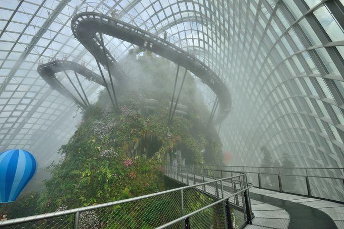 霧に覆われたまさにレイン・フォレスト