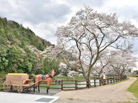 兵庫県のど真ん中!「神河町」の魅力を語る5つのキーワード