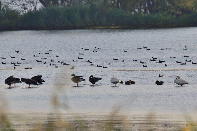 湖北野鳥センターで見られる野鳥