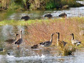 滋賀県「湖北野鳥センター」でお手軽バードウォッチング&周辺散策