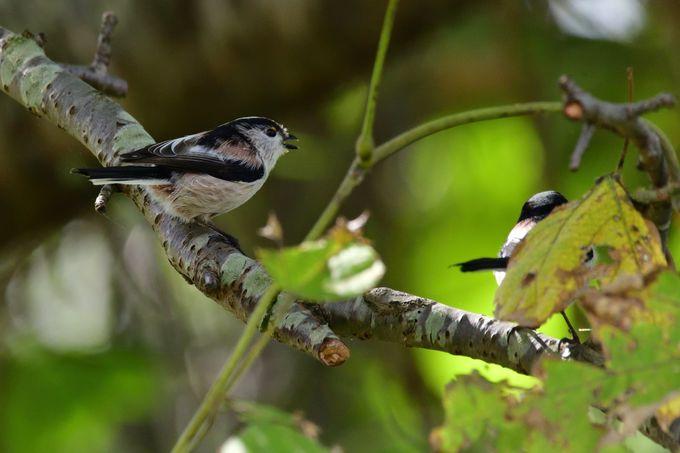 周辺の野鳥観察スポット