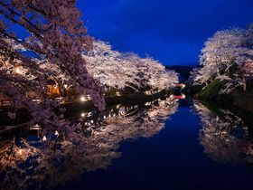息をのむほどの美しさ!お堀の水面に輝く鳥取「鹿野城」の夜桜