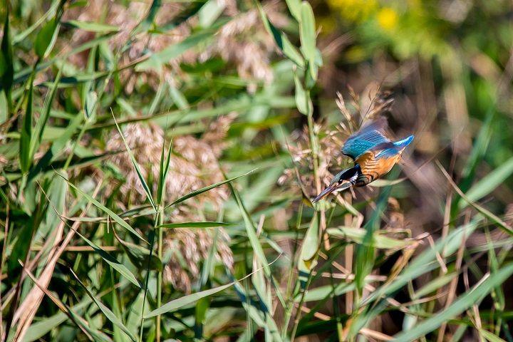 ラムサール条約登録の広大な湿地帯公園・米子水鳥公園