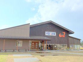 一年中、何度行っても楽しめる水族館・鳥取「かにっこ館」なんと入場無料!