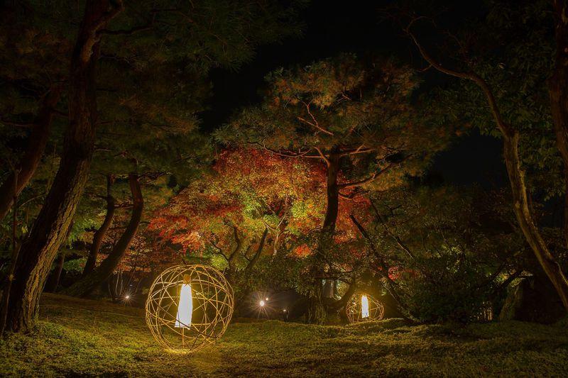 紅葉とライトアップが美しすぎる庭園・島根県大根島