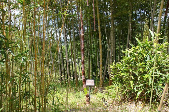 竹と笹の癒しの空間「竹林公園」