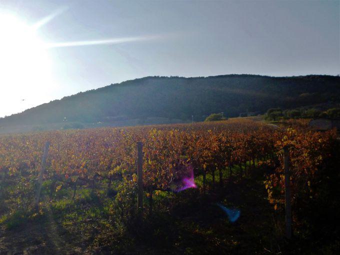 イタリア屈指の高級赤ワイン・ブルネッロの里「モンタルチーノ」