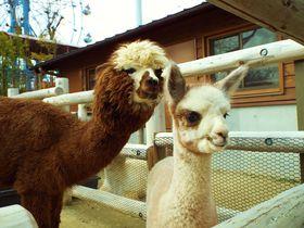 癒しの動物に会おう!宇部市「ときわ動物園」で親子のひと時を