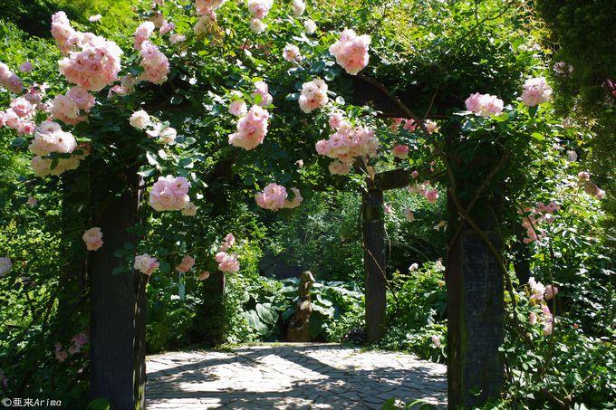 妖精が住む庭を歩こう