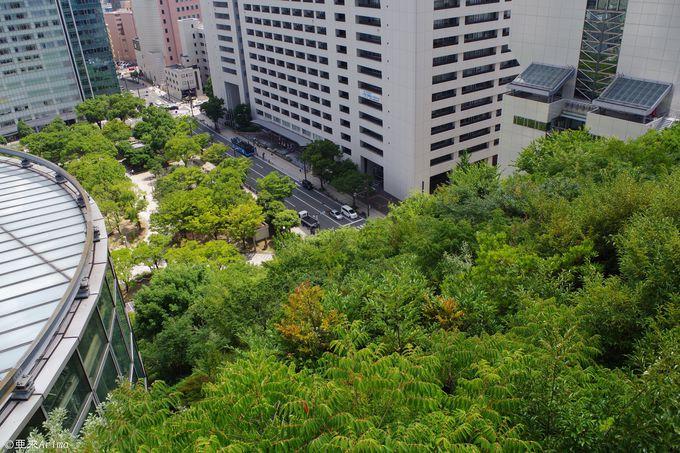 アトリウムに透ける空と天神の街、そして緑の滝。