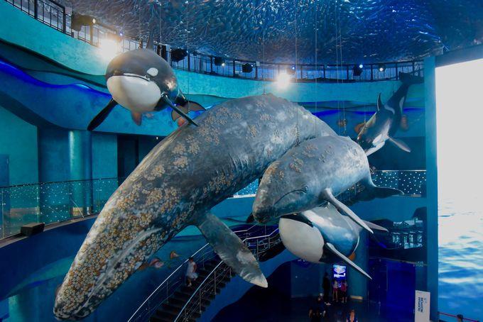 シャチやクジラがお出迎え!