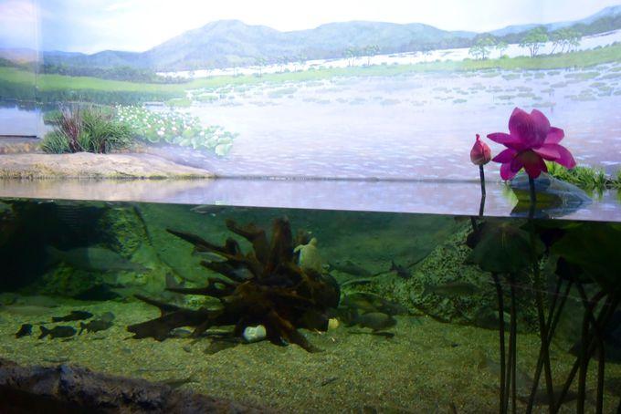 沿海地方に生息する水中生物もまたリアル