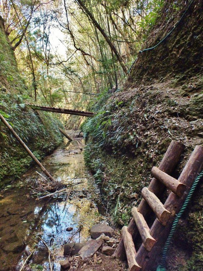 川床の奇岩と国内屈指のシダ群落