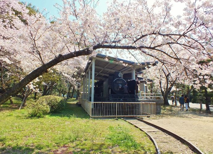 機関車の桜から徳島城本丸跡の桜へ