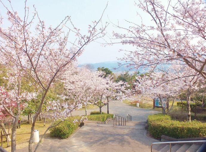 枝垂れ桜もある桜群と展望