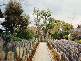 奈良市屈指の美しい仏像と随一の神聖地〜奈良町と御蓋山界隈〜