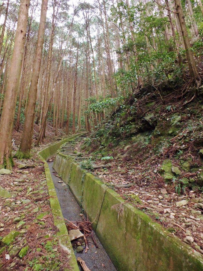 木の根道の先には陸軍の砲台跡が