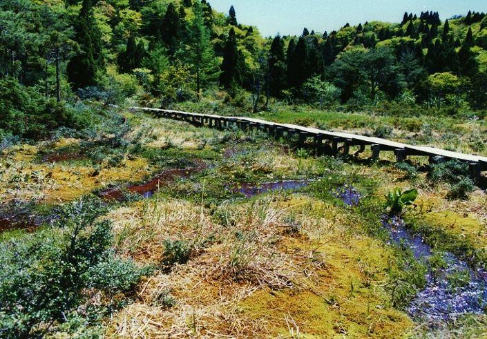 コース随一の展望スポットと山上の湿原