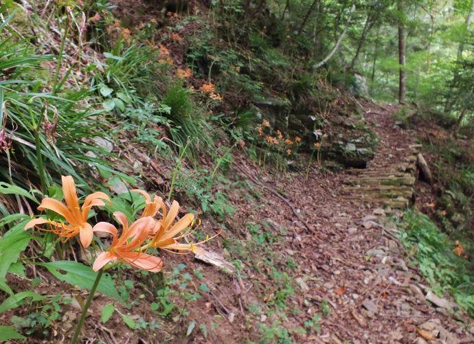 渓谷に映える橙色の花群落