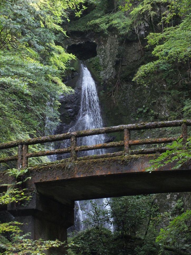 キレンゲショウマと恋のパワースポットの滝
