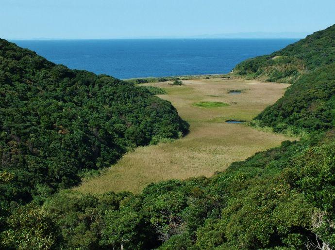 海岸沿いに広大な湿原