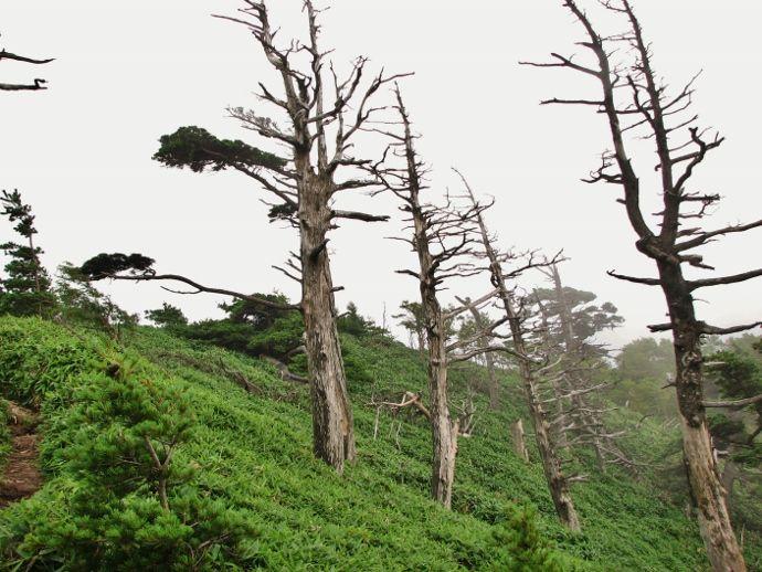 一ノ森のシコクフウロ群落と高原の剣山