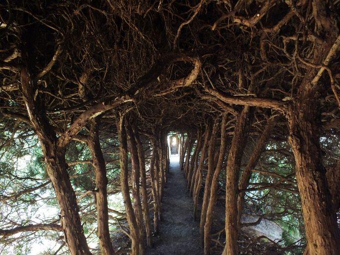 自然の森にはない真の「トトロトンネル」