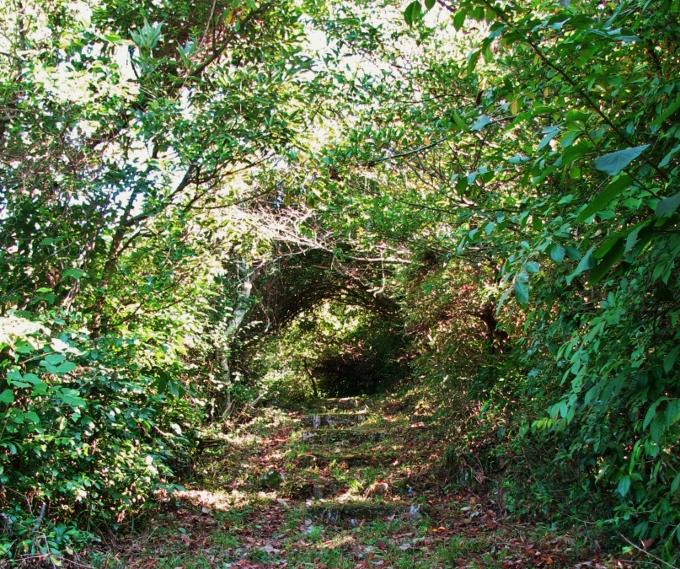 第二奇兵隊の防塁の先にはトトロのトンネル