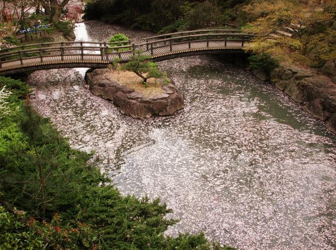 庭園風の川は桜の花弁で埋め尽くされる