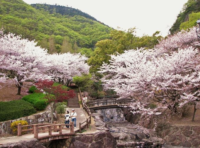 桜の中に紅葉もある不動の滝カントリーパーク