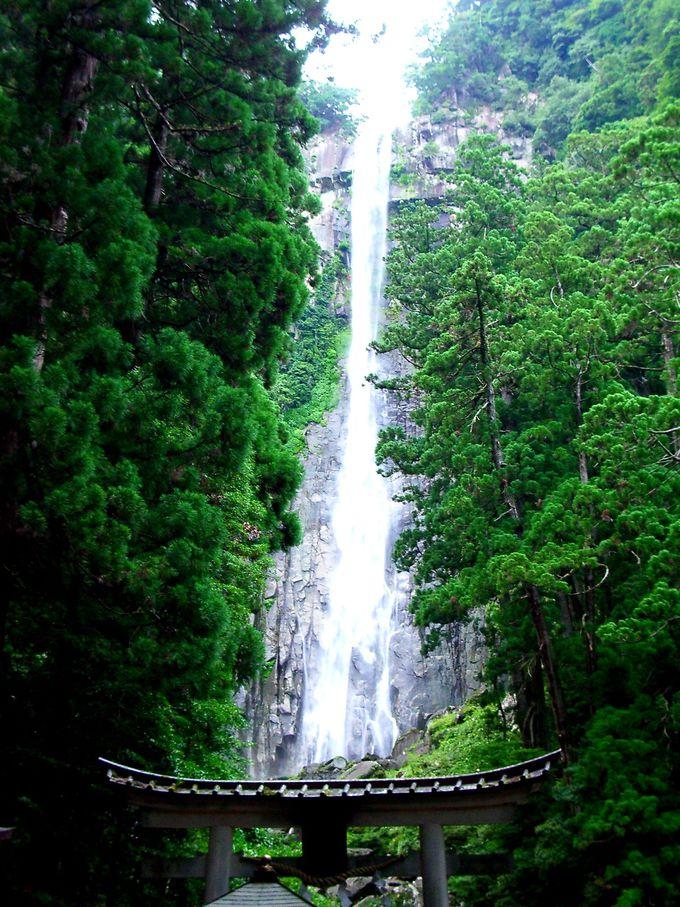 133mに真っ直ぐ流れ落ちる那智の滝を様々な角度から