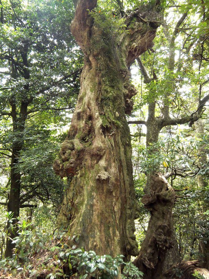 樹木のパワーが強力なパワースポット!