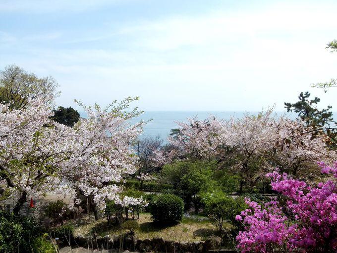 兵庫・須磨〜板宿まで、六甲連山の西で人気のコース