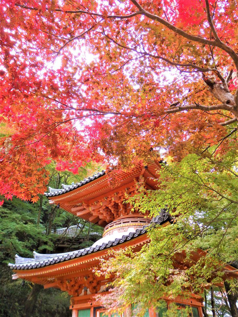 大阪「牛滝山」錦繍に染まる紅葉と滝を巡るプチハイキング!