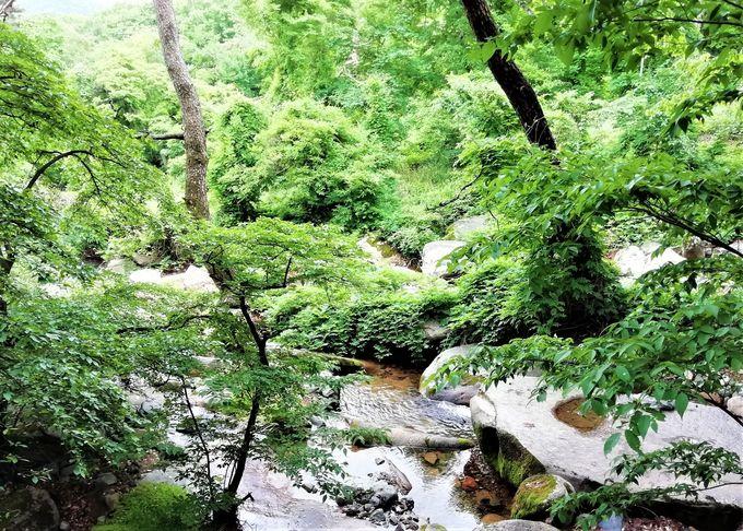街中から緑豊かな山の麓へ。釜山の自然に癒される!