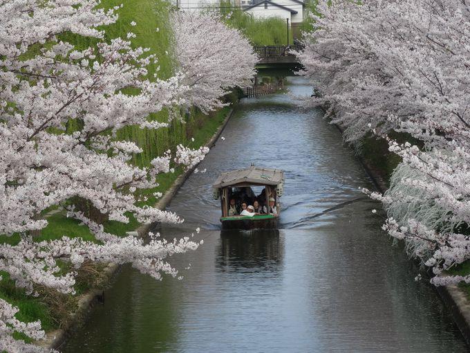 【3日目/AM10:00〜】「伏見十石舟」に乗って美しい景観に溜息……