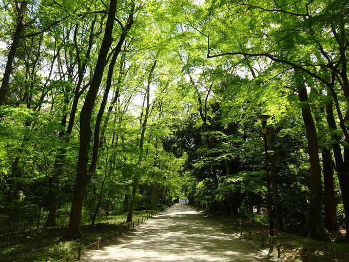 下鴨神社参道に広がる「糺の森」は癒し効果抜群
