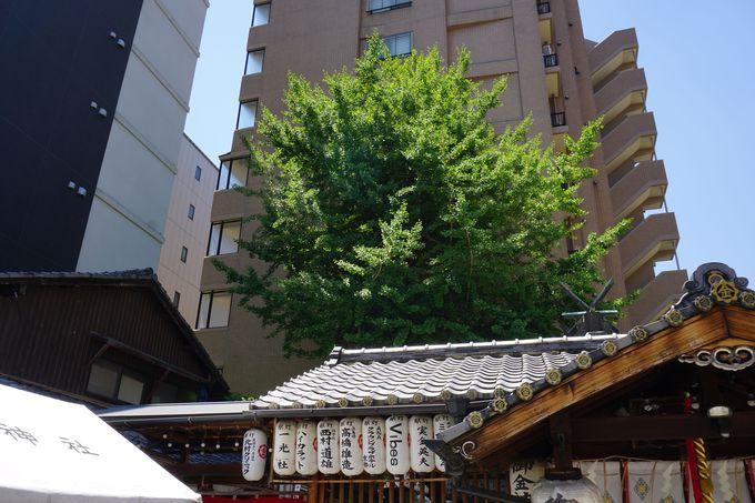 御神木は龍神様が宿るとも言われる京都有数のイチョウの大木