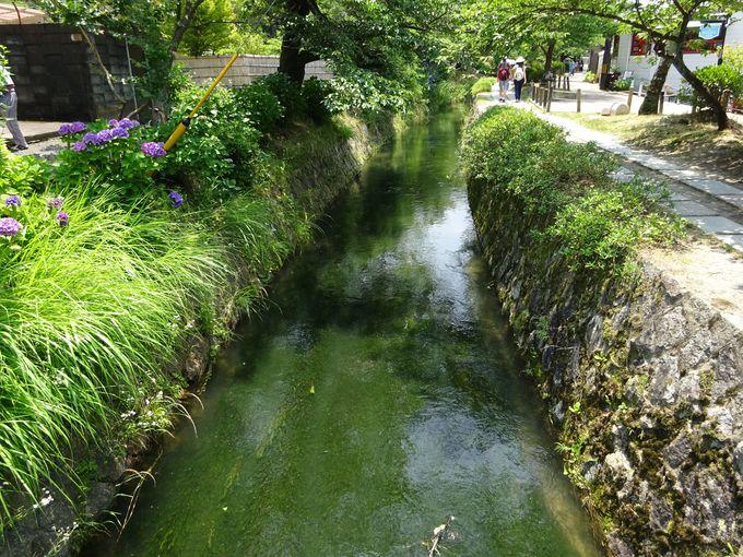 琵琶湖疎水沿いは四季折々の自然に溢れた美しい場所