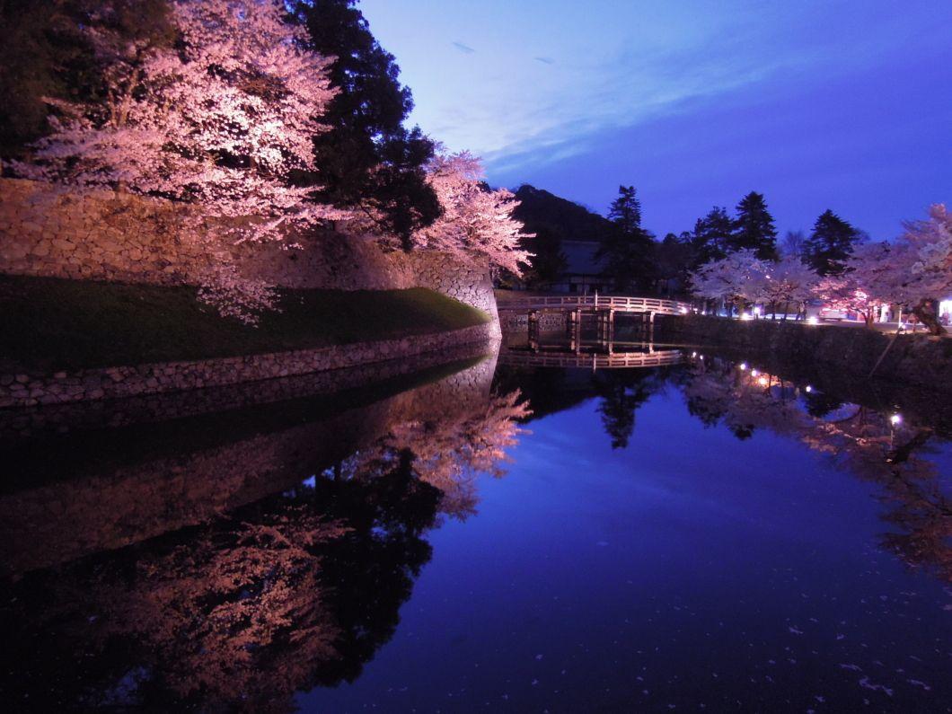 まさに花明り。彦根城の夜桜を楽しもう!