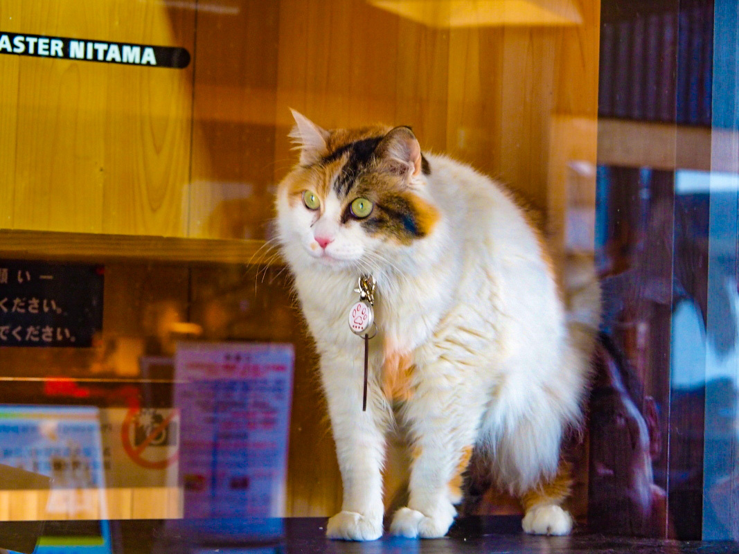 「貴志駅」でマネージャー駅長「ニタマ」とご対面