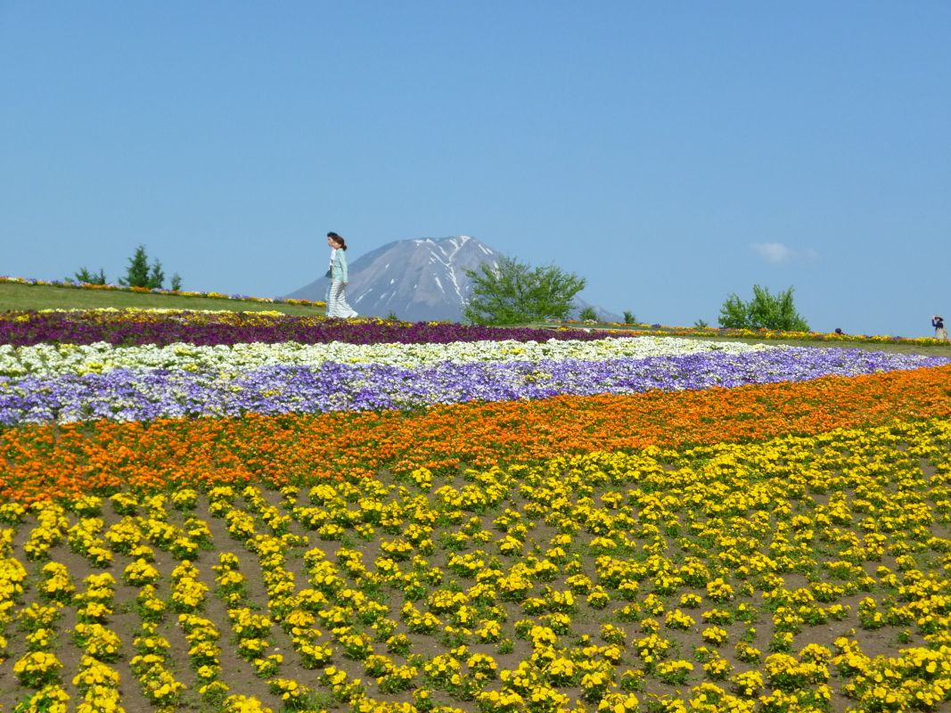 6.とっとり花回廊/西伯郡