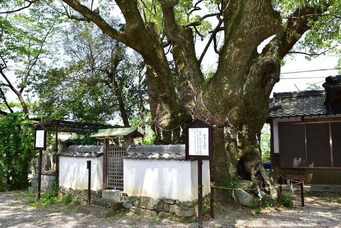 熊野信仰とともに発展した神仏習合の神社