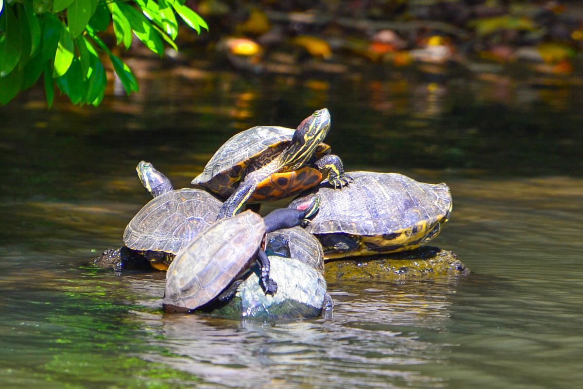自然豊かな松江を感じられる「自然区」の景観