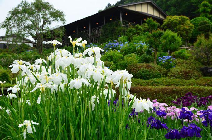 食事も楽しめる花しょうぶ園の園内施設