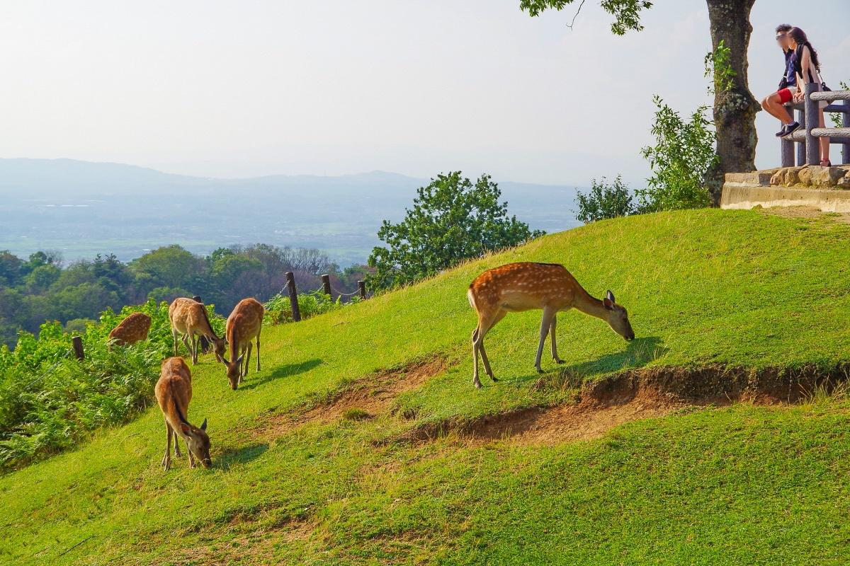 まずは「新若草山コース」で若草山の昼間の眺望を楽しもう