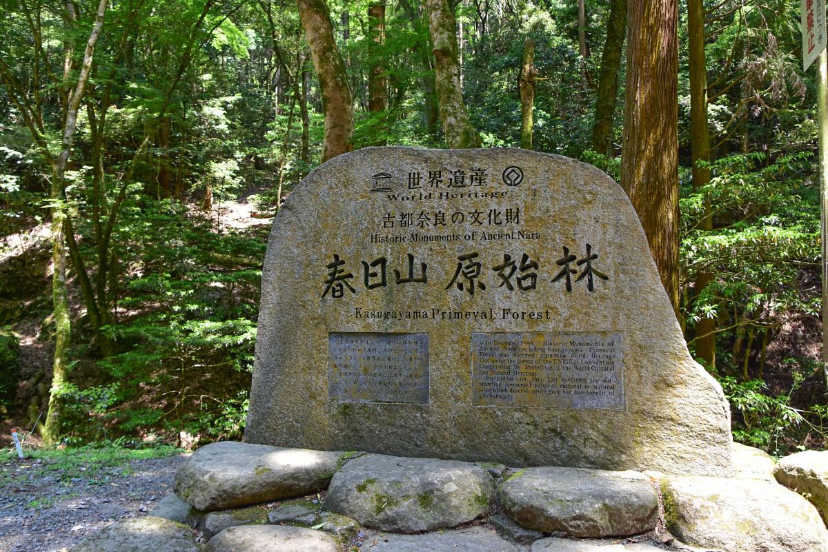 春日山原始林を縦走する「奈良奥山コース」